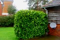 Neatly Trimmed Hedges