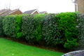 We Can Always Provide Bespoke Touches To Any Project, As We Did With This Patterned Hedge Arrangement